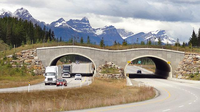 /images/migrating-safely/Wildlife_overpass_Trans-Canada_Hwy_between_Banff_and_LakeLouise_Alberta.jpg